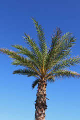 Palm tree on the Texas Coast