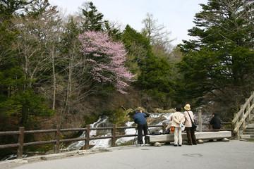 桜 お花見 撮影