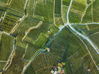 Foto op Canvas Luchtfoto beautiful aerial landscape of wine yards, top view of grape plantation