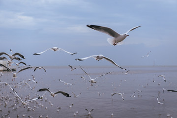Seagulls flying over the sea and are swimming in the water