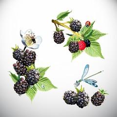 Berry, blackberries