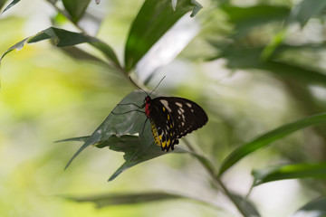 Schmetterling - Blattspaziergang