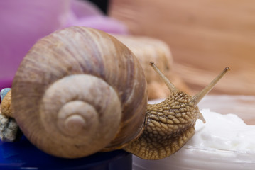 The snail sits on a rejuvenating cream, on a background of flowers