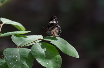 Image of thailand Butterfiy  in natural forest