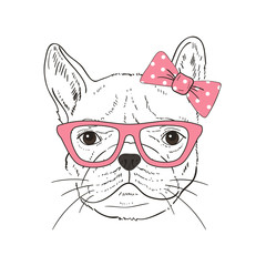 French Bulldog  hand-drawn poster. Vector illustration
