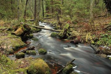 rapid stream picturesque forest landscape, long exposure
