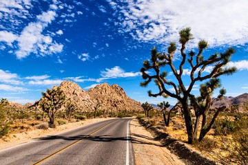 Straße im Joshua Tree National Park Kalifornien
