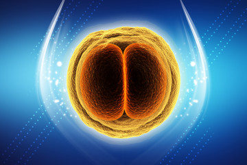 3d rendered Zygote Cell Division isolated on color background