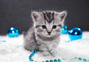 A kitten with Christmas balls. Kitten and new year decoration blue