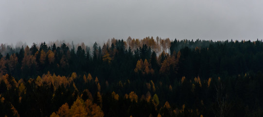 autumn trees with fog above
