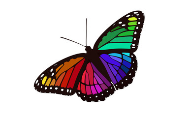 Rainbow Butterfly Digital Illustration - Monarch Graphic Design