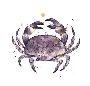 Crab, watercolor, Fresh seafood illustration