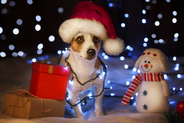 Dog with gift in christmas hat