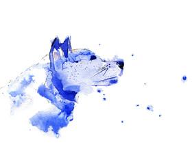 Dog, Watercolor husky dog animal illustration