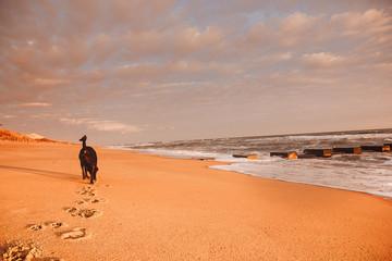 dog walk on beach 4