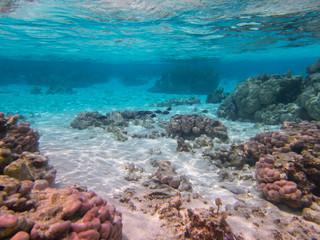 Nager dans la barrière de corail