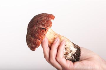 big cepe in a hand