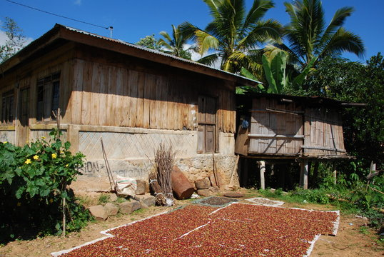 Maison avec récolte de café qui sèche au soleil