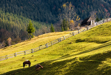 horses grazing on a grassy hillside with wooden fences near the village. lovely rural scenery in autumn