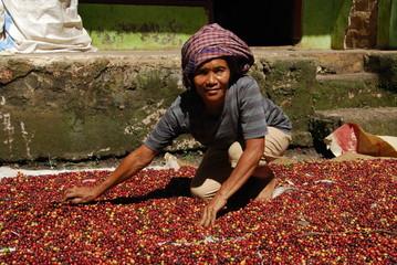 Fotobehang koffiebar Femme étalant les grains de café