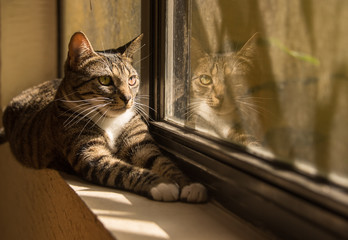 Cat And Her Reflection By Window