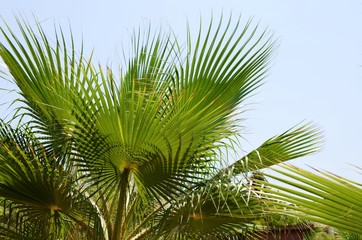 Background with green palm leaves and blue sky. Traveling background