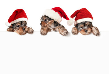 Christmas dogs with white banner