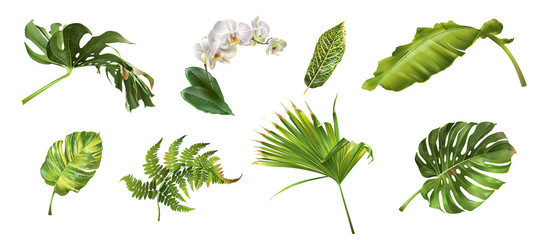 Tropical plants set