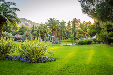 Tuinposter Palm boom Beautiful park in new district of Budva, Montenegro