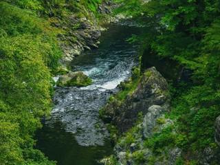 渓流と森林