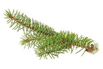 Christmas tree branch isolated on a white background