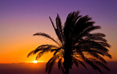 The purple and orange sunset with. a palm tree