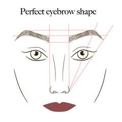 eyebrows scheme vector illustration