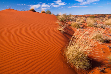 Stores à enrouleur Rouge traffic Red sand dunes and desert vegetation in central Australia