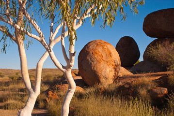 Ghost gums and the Devil's Marbles, Australia