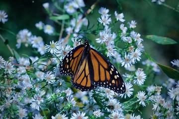 white flower butterfly