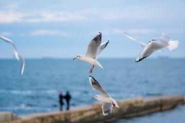 Seagulls flying over the sea. Pier on background.