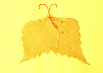 Butterflie from dry leaves on a light yellow background composition