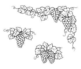 drawing vine leaves