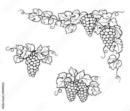 879cfdd80 drawing vine leaves