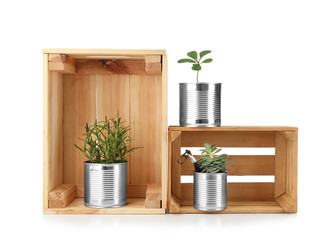 Composition with cans used as containers for growing plants on white background