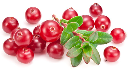 Ripe cranberries and green branch on the white background.