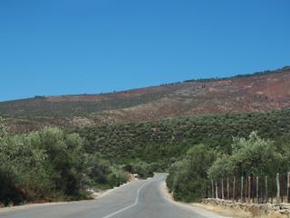 Droga wśród gajów oliwnych na greckiej wyspie Thassos