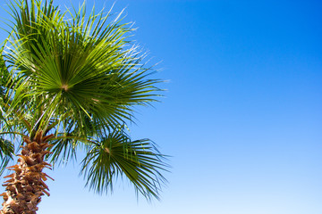 travel and vacation concept - palm tree over blue sky