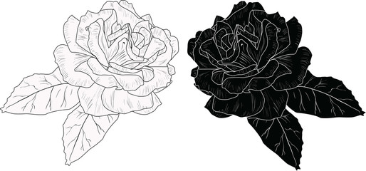 isolated two roses blooms white and black sketches