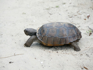 tortoise walking on the sand on a beach