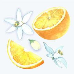 Watercolor oranges.
