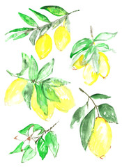 A sketch of citrus fruit of a lemon on a branch in the style of watercolor.