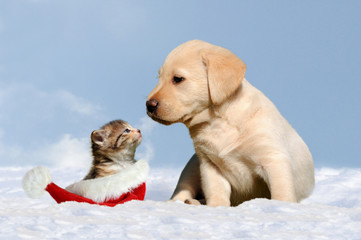 dog and cat in the snow