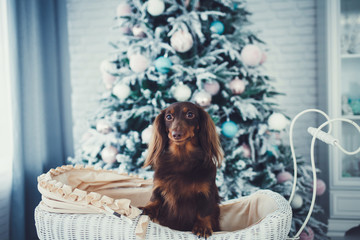 Small cute funny dog on Christmas tree background